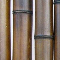 Вид обожженных стеблей бамбука