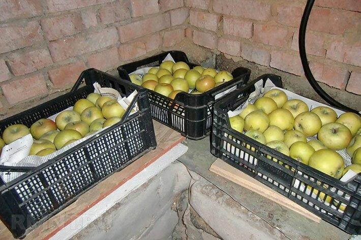 Упаковка яблок в специальные ящики